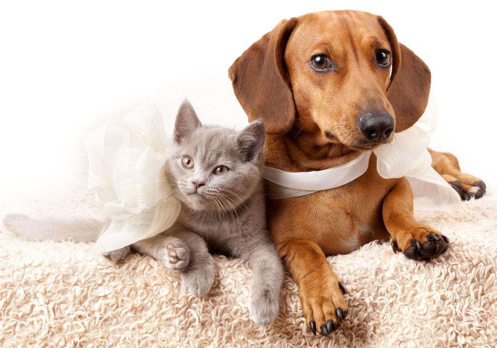 como-cuidar-de-tus-mascotas-cuando-se-hacen-mayores