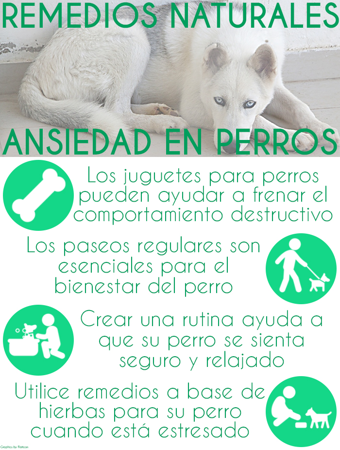 remedios-naturales-para-la-ansiedad-del-perro