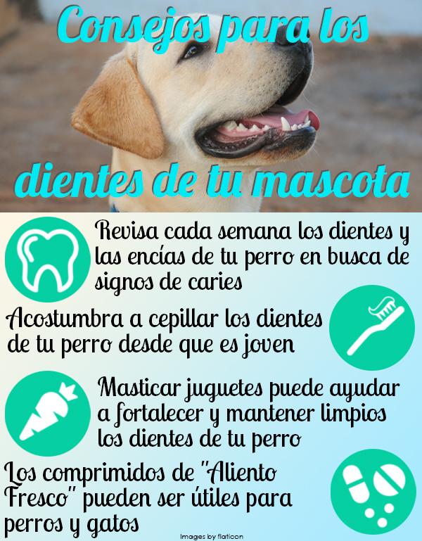 consejos-para-los-dientes-de-tu-mascota