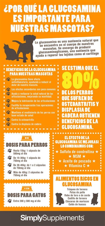 infografia-por-que-la-glucosamina-es-importante-para-nuestras-mascotas