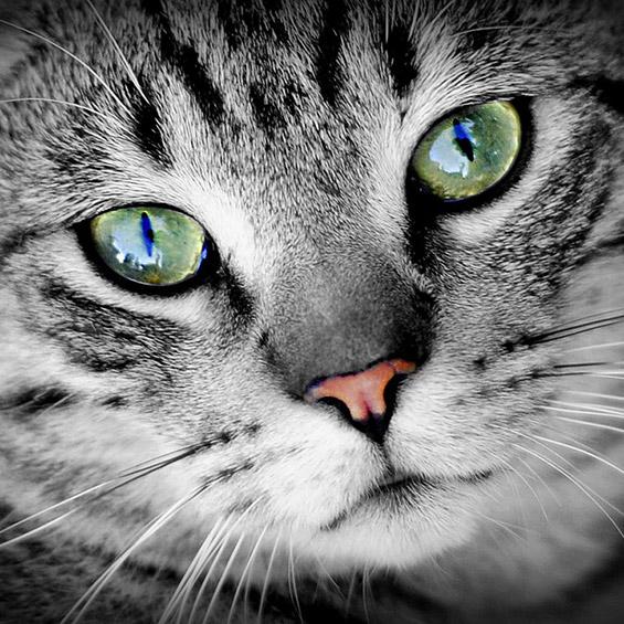 mi-gato-esta-estresado