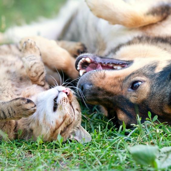 artritis-y-problemas-articulares-en-perros-y-gatos