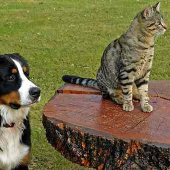 como-atender-a-nuestras-mascotas-ancianas